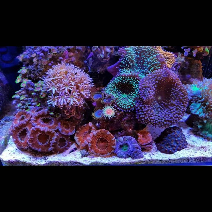 17 best images about nano reef inspiration on pinterest for Aquarium nano marin