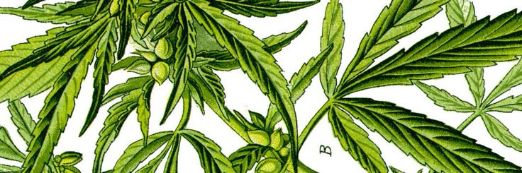 Benefits of Marijuana on Anxiety.