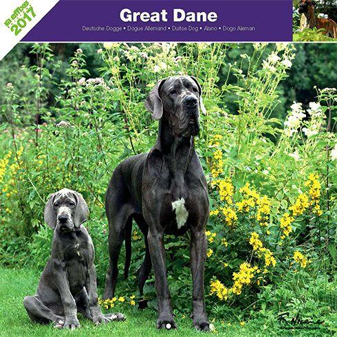 Calendrier chien 2017 - Race Dogue allemand - Affixe Edition
