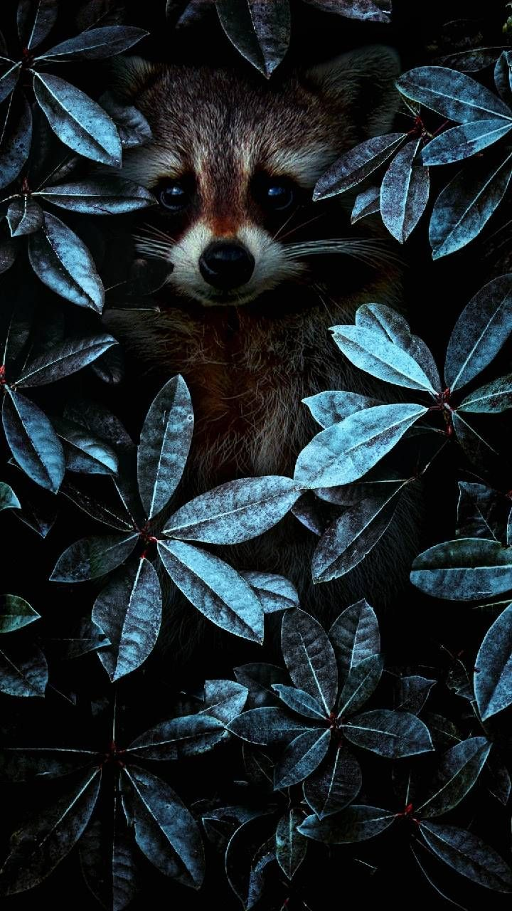 Download 4k Tilki Wallpaper By Oled Ekran 90 Free On Zedge Now Browse Millions Of Popular 4k Wallpapers And Ring Animal Wallpaper Animal Art Cute Animals