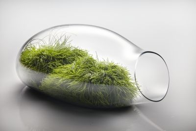 Glass Garden // Aleksandra Kujawska Design