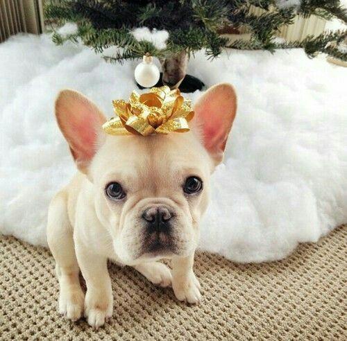 ¿Qué es la Navidad? Es la ternura del pasado, el valor del presente y la esperanza del futuro. Es el deseo más sincero de que cada taza se rebose con bendiciones ricas y eternas, y de que cada camino nos lleve a la paz ♡ Felices fiestas para todos ♡