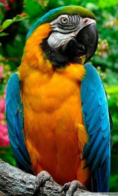 Παπαγαλος