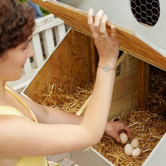 Chicken Coop Basics Learn the elements of great chicken coops.