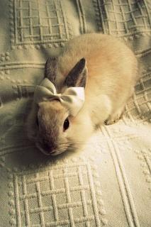 Cute bow bunny