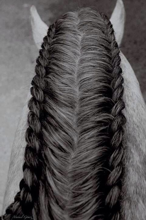 Such a cool way to braid horse's hair