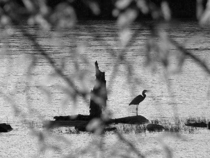 Columbus, ga riverwalk bird