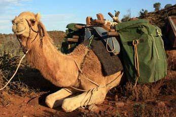 Flinders and Beyond Camel Treks - Blinman, South Australia