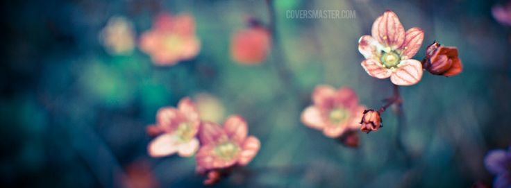 facebook cover photos | ... fb profile cover timeline covers photograhy focus flowers fb covers
