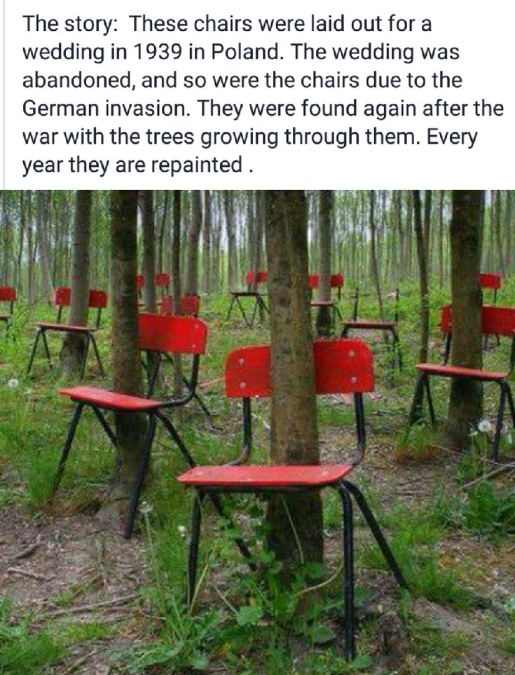 But how foes every chair have a tree? That seems unlikely unless someone planted the trees that way.
