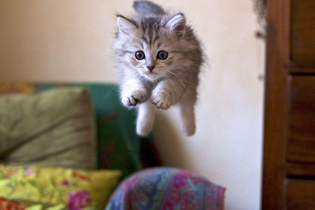 KittySummer Olympics, Super Kitty, Kitty Cat, Fly Kitty, Leap Of Faith, Kittens, Birds, Cat Memes, Animal