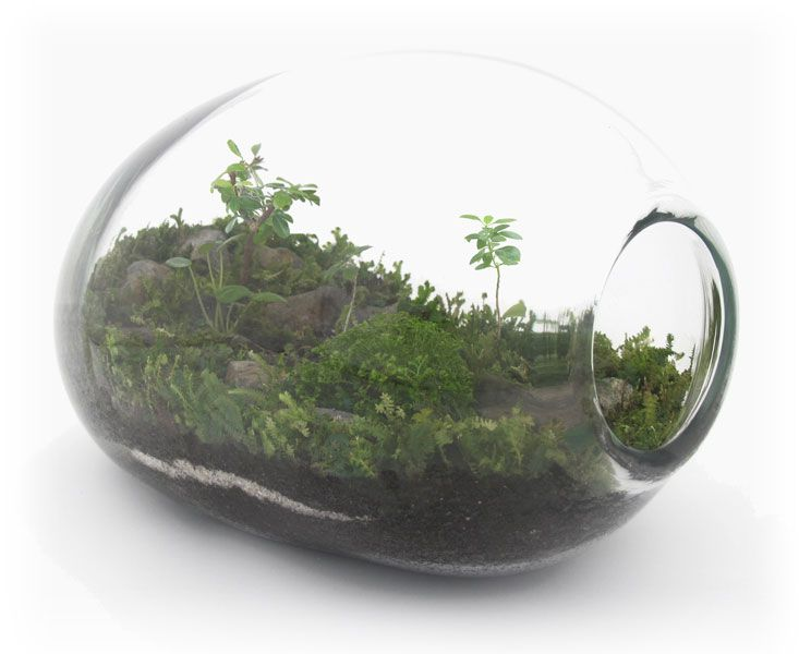 Here Are A Few Of My Hand Blown Terrariums. Some Were Shot For A Story In  The September Issue Of Antenna Magazine. Part 52