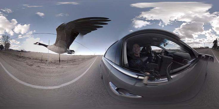 Телеканал KTVB из города Бойсе (штата Айдахо, США) заснял на камеру с съемкой в 360-градусов довольно необычный материал, показав всему миру уникального гуся, который «влюбился» в машину.…