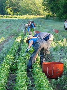Tips for large-scale weeding on organic farms