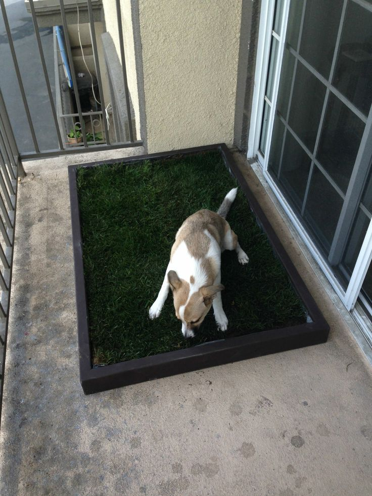 doggy and the large dog litter box with real grass fits on this patio perfectly see more at www. Black Bedroom Furniture Sets. Home Design Ideas