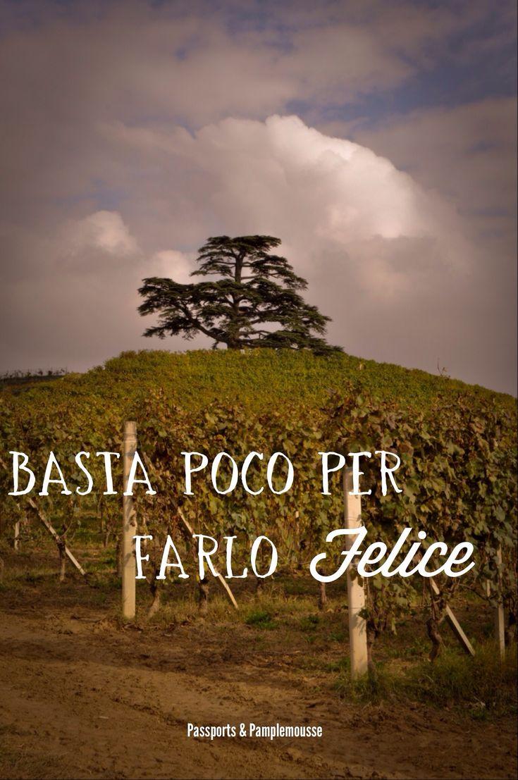 La Morra #cedrodellibano #monfalletto