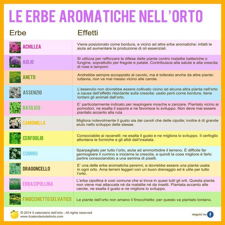 Le erbe aromatiche nell'orto