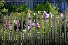 colonial williamsburg fences and gates - Google Search