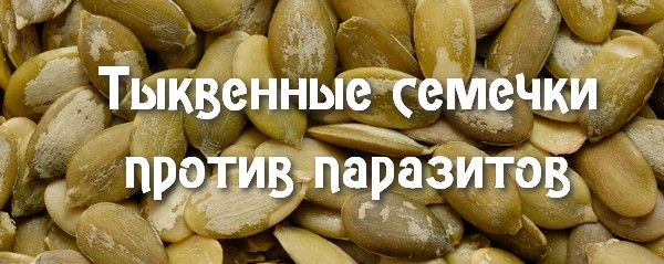 Польза тыквенных семечек для организма и их калорийность