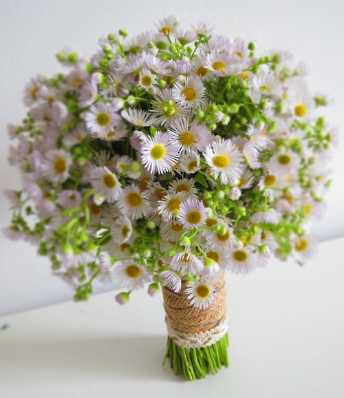 botanic-art:  Bridal Bouquet with white Aster Flowers Botanic Art