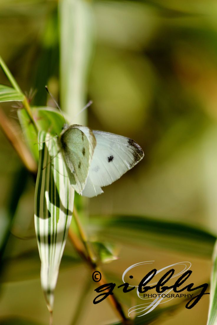 Butterfly in Hamilton, New Zealand. Please contact us for