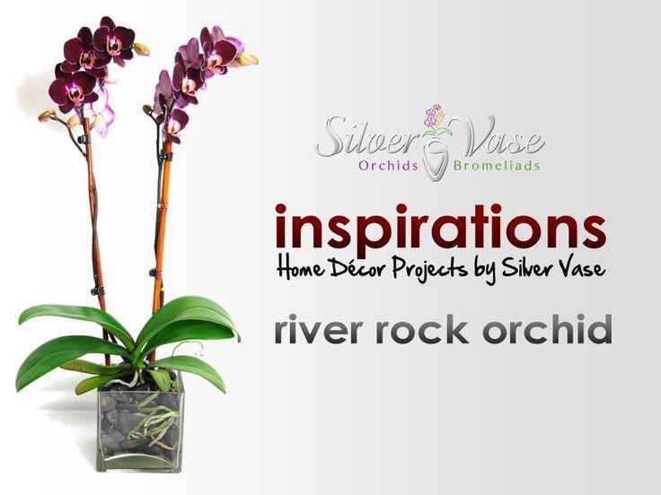 14 Best Mystique Orchids Images On Pinterest Blue