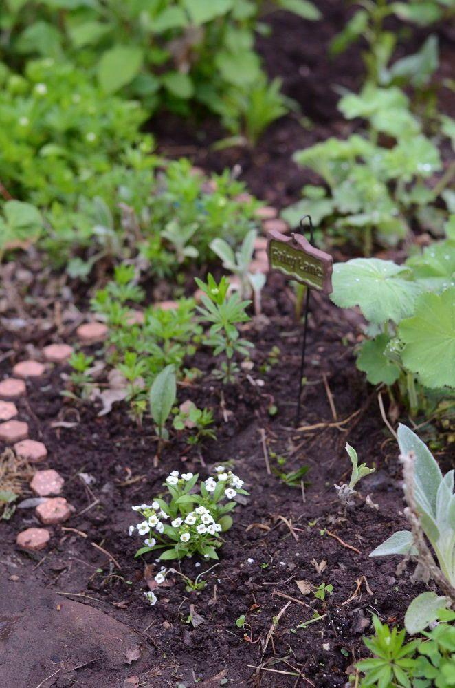 Creating A Fairy Garden In The Garden