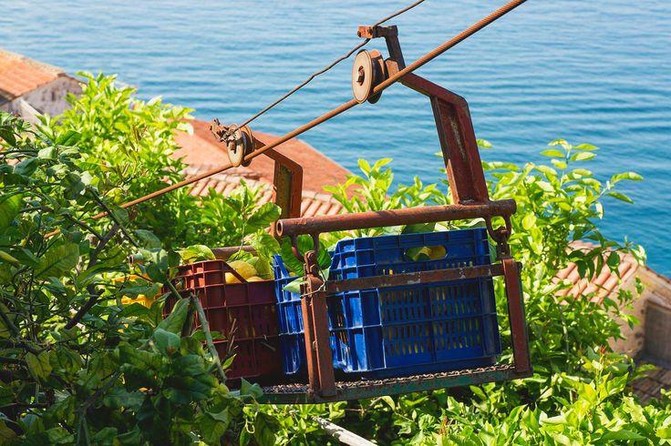 Quando e dove possiamo utilizziamo teleferiche per portare i nostri frutti dalla cima delle nostre colline giù al mare. Parco delle Zagare - Amalfi - SA  #Amalfi #Lemons - #Organicfarm - #Sfusato #Amalfitano - #AmalfiCoast - #Verticalland