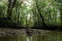 La conservación de la cobertura boscosa permite controlar la concentración de gases que producen el efecto invernadero y mitigar los efectos...