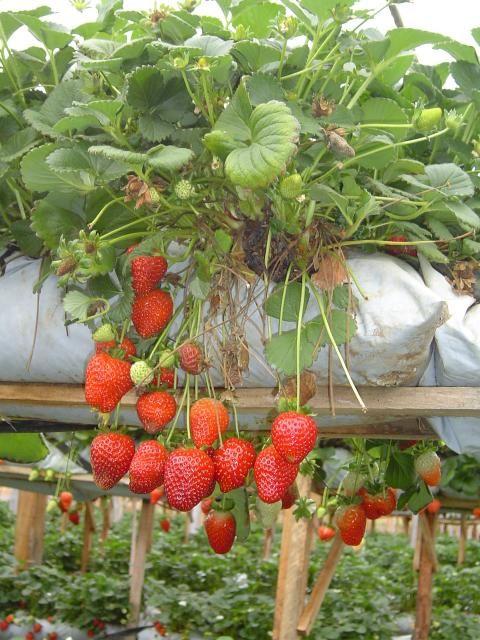hbgvfc: Search, Gardening