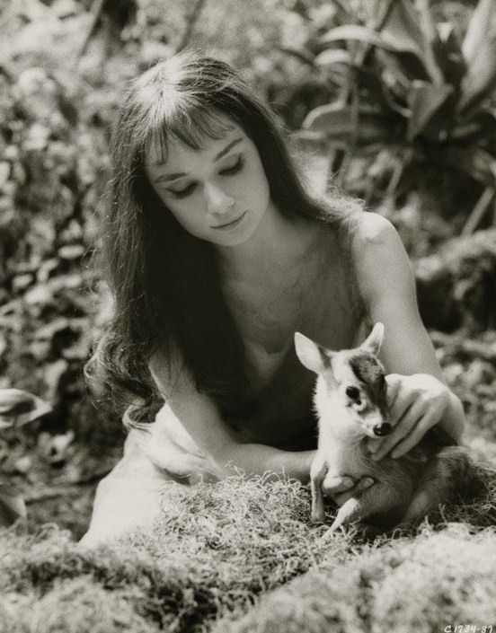 Audrey Hepburn and her pet fawn Pippin