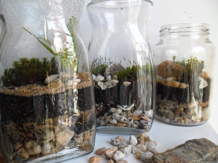 Saiba como montar um mini jardim em potes de vidro