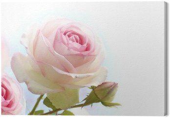 Obraz na Plátně Růžové růže na modrém bílém pozadí
