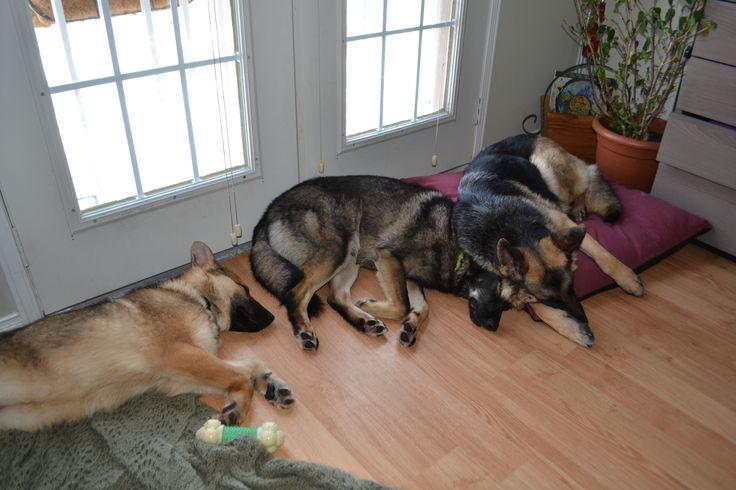 A loving dog pack