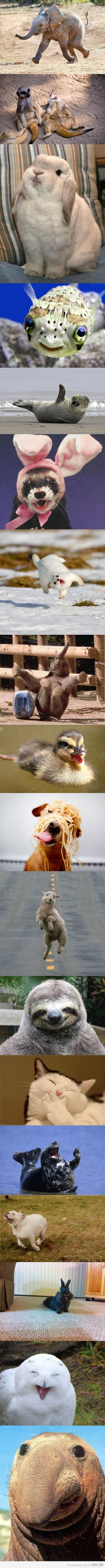 happiest animals ever!