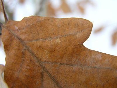 How to Make Oak Leaf Compost