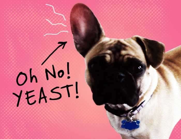Natural Ways To Cure Yeast Infection In Dogs