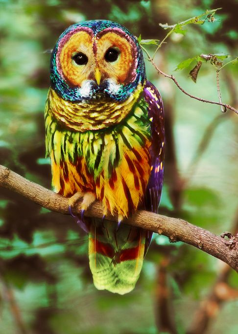 A Short Update On The Energies Owl Search And Colorful Owl
