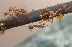 How to Treat a Fire Ant Sting