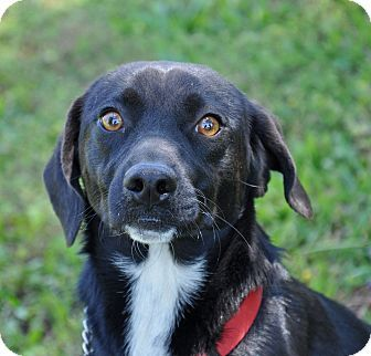 Sundial - Border Collie mix - young female - Barnesville, GA - Dolly Good Puppy Society - http://dollygoodpuppy.org http://www.adoptapet.com/pet/8094280-barnesville-georgia-border-collie-mix