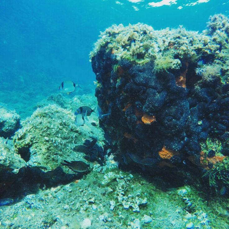 Ayvalık dalış okulu - ida dalış merkezi #scuba #scubadiving #diving #underwater #dalisnoktam #ayvalikdalis #ayvalikscuba #idadalismerkezi #ayvalikida www.idadiving.com