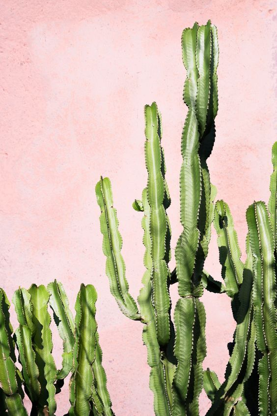Pastel roze muur met cactus party. // via Hibrid Blog