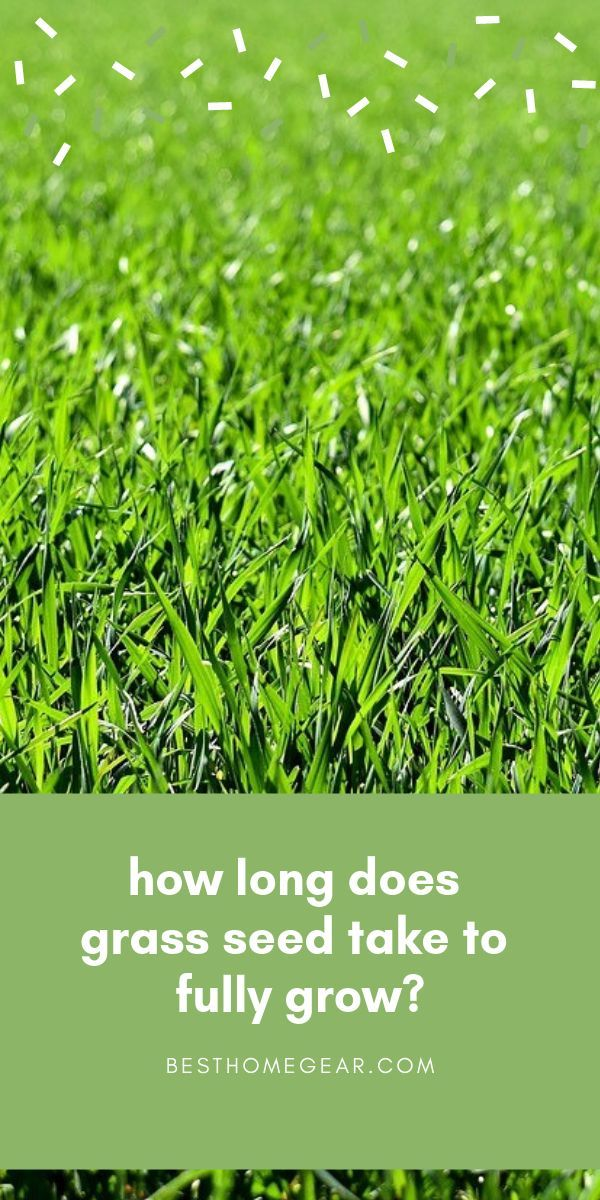 How Long Will It Take Grass Seed To Grow Best Home Gear Grass Seed Healthy Grass Grass