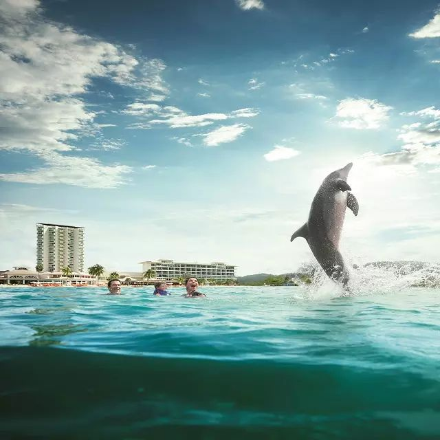 Moon Palace Jamaica Grande – All-Inclusive has a fun program where your family can swim with dolphins!
