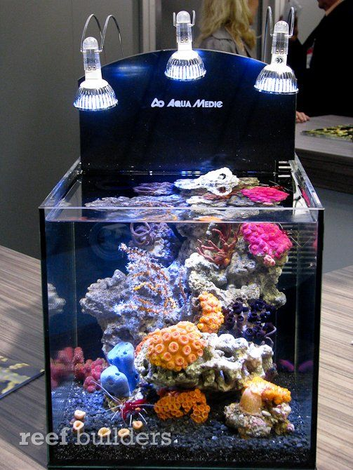The striking nano reef aquarium pictured above is a for Saltwater fish tank kit