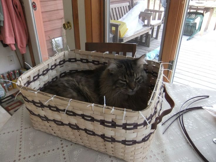 Gabby in a not quite finished basket.  Just the right size!