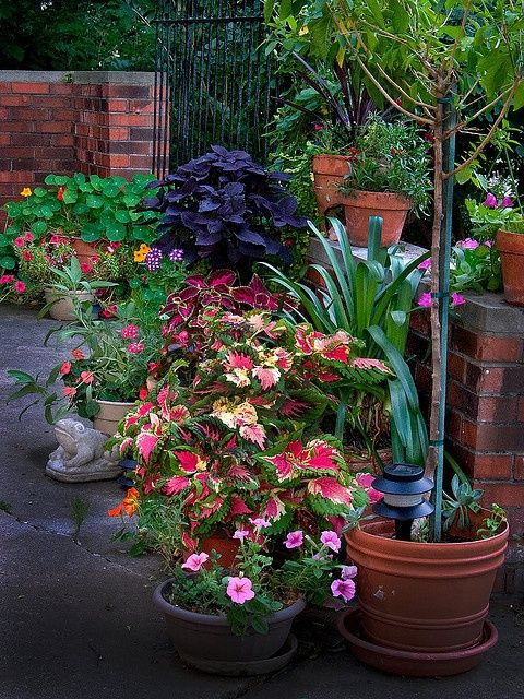 How to Use Potted Plants to Dress Up Outdoor Spaces
