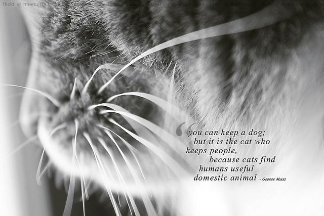 Jeg synes det er sant, at katter eier oss. Uansett, her er et bilde jeg tok for en stund siden. Slet litt med å finne en sitat til denne!  ---  I find it true, that cats keeps us. Anyway, here's a picture I took for aw\ while ago. Struggled a bit to fi cat quotes