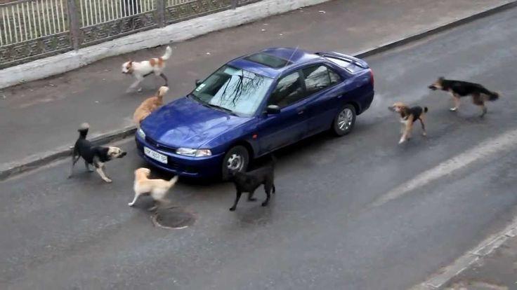 क्यों कुत्ते चलती गाड़ियों के पीछे क्यों दौड़ते हैं जानिए कारण