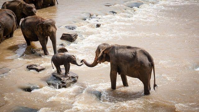 elephant-safari-africa
